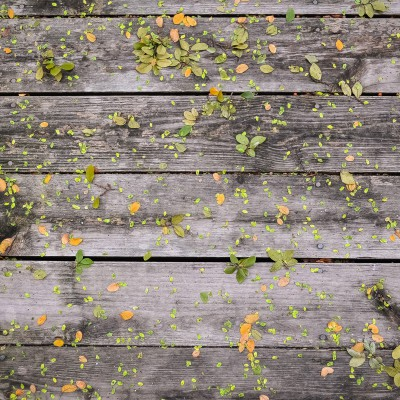 Pattern in the Leaves
